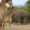 Kruger National Park Morning Game Drive