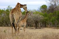 Kruger National Park Morning Game Drive Photos