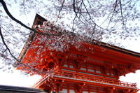 Kyoto Afternoon Tour to Heian Shrine, Sanjusangendo Hall and Kiyomizu Temple from Osaka Photos