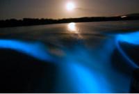 Luminous Lagoon Night Cruise in Jamaica Photos
