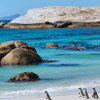 Marine Big 5 Catamaran Safari Adventure from Cape Town