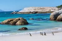 Marine Big 5 Catamaran Safari Adventure from Cape Town Photos