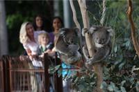 Melbourne Zoo General Entry Ticket Photos