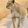 Moholoholo Wildlife Rehabilitation Center Tour