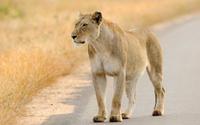 Moholoholo Wildlife Rehabilitation Center Tour Photos