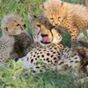 Mpumalanga Super Saver: Moholoholo Wildlife Rehabilitation Center and Cheetah Breeding Project