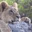 Nairobi National Park, Karen Blix Museum and Langata Giraffe Center Tour from Nairobi
