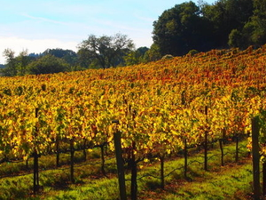 Wine Country Bike Tour and Picnic Lunch with Transport from San Francisco Photos