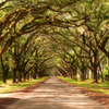 New Orleans Super Saver: Swamp and Bayou Sightseeing plus Oak Alley Plantation Tour