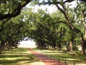 New Orleans Shore Excursion: Post-Cruise Westbank Plantation Tour Photos