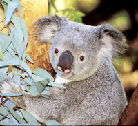 Perth Zoo General Entry Ticket and Sightseeing Cruise Photos
