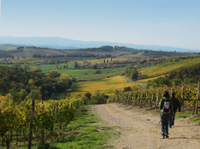 Private Tour: Guided Hike in Tuscany with Transport from Siena Photos