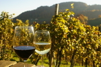 Private Tour: Austrian Wine Tasting in a Traditional Augustinerkeller Photos