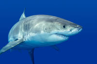 Private Tour: Cage Dive with Great White Sharks from Cape Town Photos