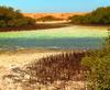 Private Tour: Mangroves