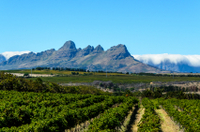Private Tour: Stellenbosch, Franschhoek and Paarl Wine-Tasting Tour from Cape Town Photos