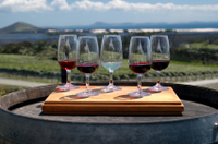 Private Tour: Wine Tasting in Bologna Photos