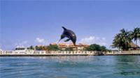 Riviera Maya Small-Group Wildlife Adventure: Manatees and Dolphins