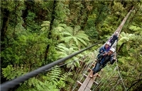 Rotorua Forest Zipline Canopy Adventure Photos