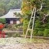Scholar-led Kyoto Walking Tour: Japanese Gardens and Landscape
