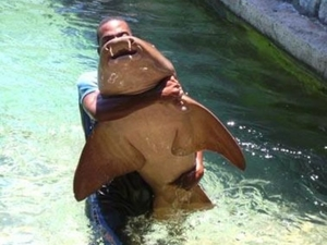 Shark and Stingray Encounter at Ocean World Photos