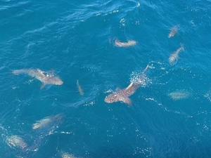 Ultimate 3-Day Great Barrier Reef Cruise Pass Photos