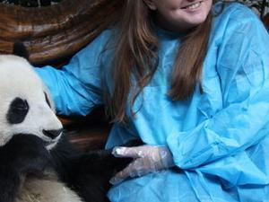 Viator Exclusive: Volunteer at Panda Breeding Center with Optional Panda Holding Photos