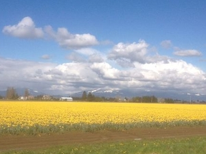 Skagit Valley Tulip Festival Day Trip from Seattle Photos