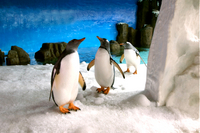 Skip the Line: Melbourne Aquarium Tickets
