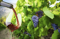Small-Group Santorini Wine Tasting and Vineyard Tour