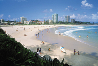 Small-Group Day Trip from Brisbane: Gold Coast Beaches and Koala Education Centre Photos