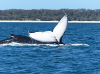Small-Group Jervis Bay Whale-Watching Cruise and South Coast Day Trip from Sydney Photos