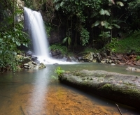 Small-Group Mt Tamborine Village and Winery Day Trip from Brisbane Photos