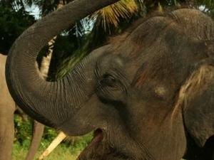 One-Hour Elephant Jungle Trek from Phuket Photos
