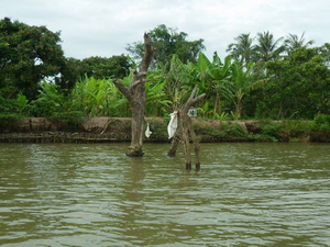 Mekong Delta Private Day Tour Photos