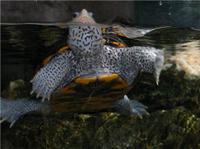 The Florida Aquarium in Tampa Bay Photos