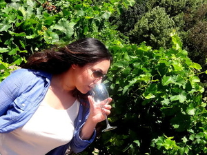San Francisco Super Saver: Muir Woods and Wine Country Tour Photos