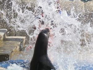 Sea Lion Encounter at Ocean World Photos