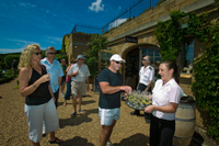 Waiheke Island Wine Tasting Tour from Auckland Photos