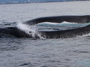Half-Day Whale Watching and Canal Cruise from the Gold Coast Photos