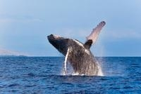 Whale Watching Adventure from Grand Turk Photos